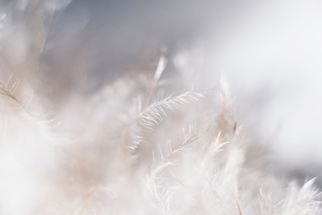 Plumes blanches